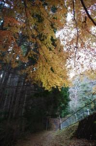 茶臼山の説明板から山道(参道)へ(大台町)