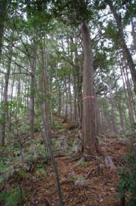 茶臼山の広場から続く山道(大台町)