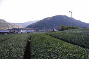 三瀬館跡付近〜北畠神社(大台町)