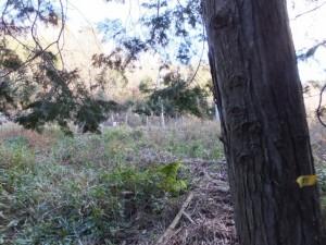 バカ曲がりから望むJR紀勢本線のフェンス(熊野古道伊勢路)
