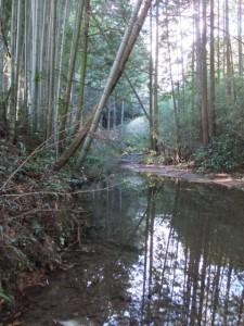 下流側から望む神瀬橋(眼鏡橋)