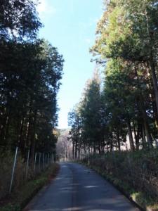 迷ったため殿様井戸の入口からアスファルト舗装路へ(熊野古道伊勢路)