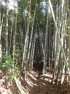 殿様井戸の出口から殿様井戸へ(熊野古道伊勢路)