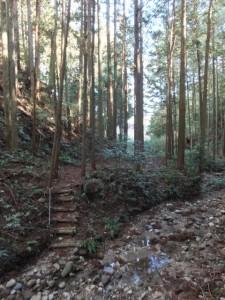 沢越しに望む殿様井戸(熊野古道伊勢路)