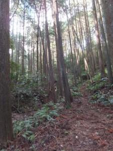 殿様井戸付近、先ほど迷った場所(熊野古道伊勢路)