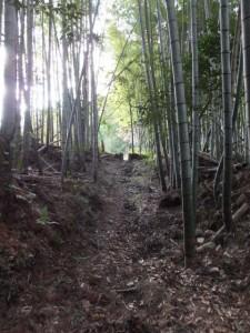 殿様井戸付近から出口へ(熊野古道伊勢路)