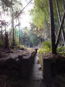 殿様井戸からの出口付近(熊野古道伊勢路)