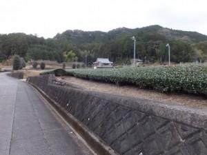 (12) 神正寺〜(11) 野添神社の途中で振り向いて
