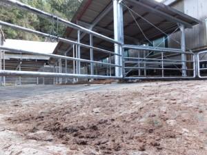 (10) 肉牛集出荷場