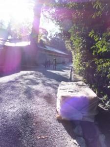 大晦日のために準備された薪(外宮北御門参道)