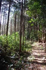 林を抜けて勝田の大池から奈良波良神社へ